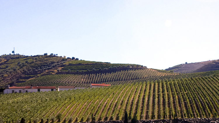 Douro wines valley