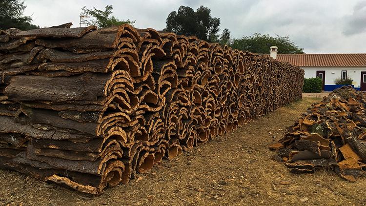Cork oak in Alentejo