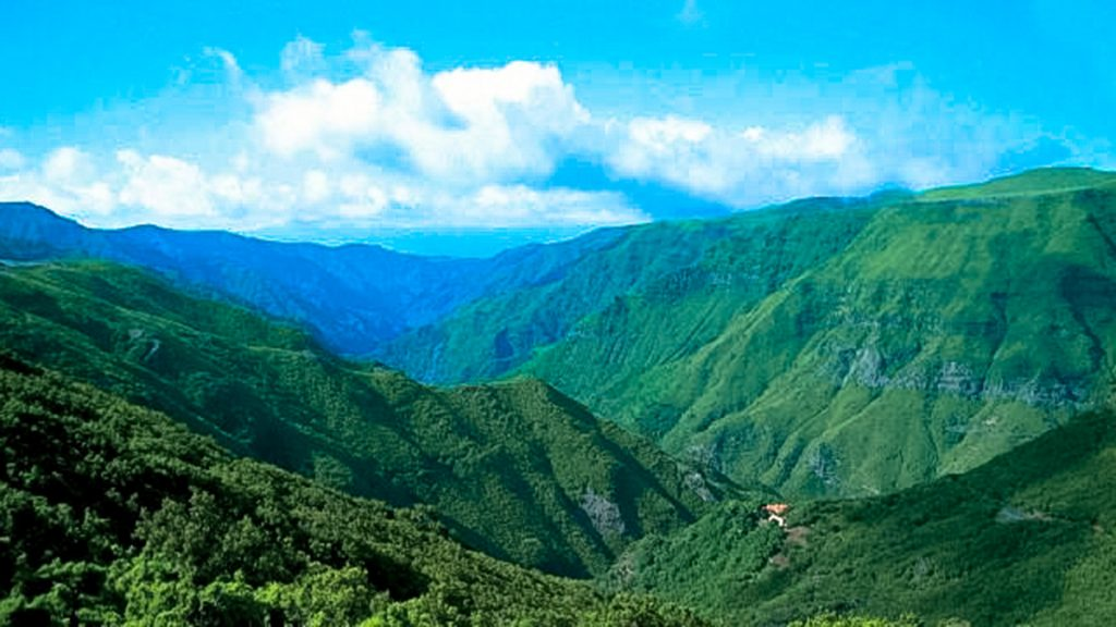largest Laurisilva forest in the world